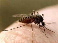Как избавиться от комаров в доме