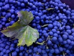 Как правильно приготовить виноградный сок