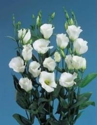 Как выбрать цветы правильно