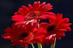 Выбрать цветы правильно