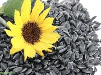 Жареные семечки: польза и вред