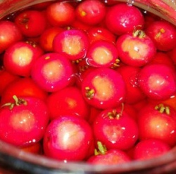 Зрелые ягоды боярышника
