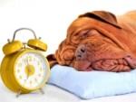 Как перестать опаздывать