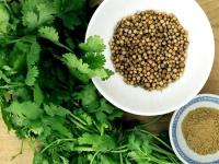 Кориандр (кинза) – полезные свойства