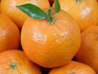Польза и вред апельсинов