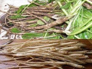 Лечебные свойства цикория