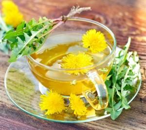 Одуванчик – лечебные свойства