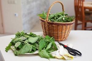 Рецепты из крапивы для волос
