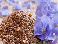 Семена льна – польза и вред