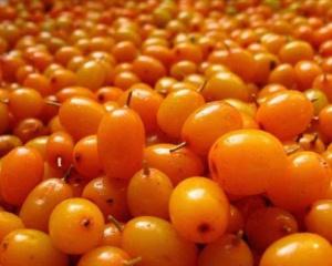 Солнечная чудо-ягода