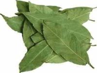Лавровый лист лечебные свойства, польза и вред