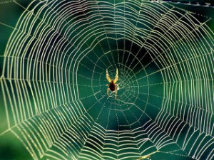 Приметы про убийство пауков
