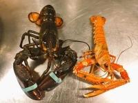 Чем отличается омар от лангуста и лобстера