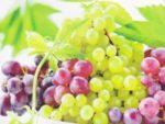 Виноград при беременности