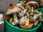 Как не отравиться грибами