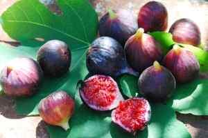 Плод фигового дерева