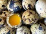 Как правильно употреблять перепелиные яйца?