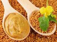 Горчица – польза и вред для здоровья